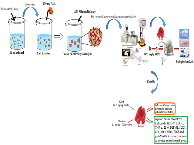 Resveratrol Nanoemulsion; A Promising Inhibitor against Mitogen-Activated Protein Kinase - Dependent Inflammation and Ameliorates Nicotine induced-lung Toxicity in Rats