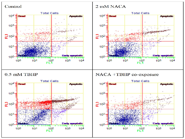 Flow cytometry analysis of apoptotic cells following the modified (co-exposure) protocol with NACA and TBHP. The dot plots show twoparameter analysis of fluorescence intensity of annexin-V FITC (FL1) and 7-AAD (FL3)