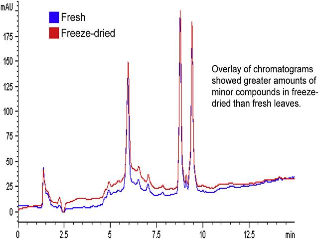 Overlay of chromatograms (254 nm) of fresh and freeze-dried leaves of Etlingera elatior.