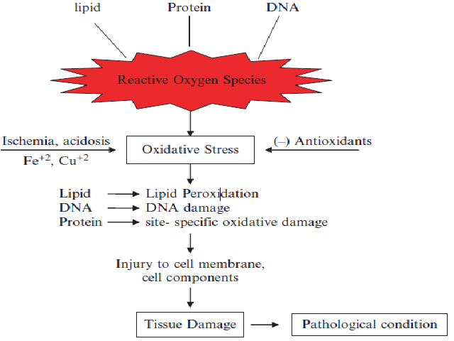Pathogenesis of tissue damage