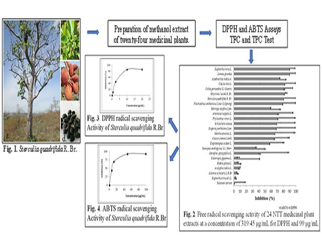 Antioxidant Capacity of Some Selected Medicinal Plants in East Nusa Tenggara, Indonesia: The Potential of Sterculia quadrifida R.Br.