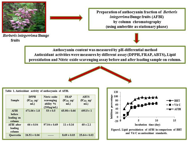 Anthocyanin Isolation from Berberis integerrima Bunge Fruits and Determination of their Antioxidant Activity