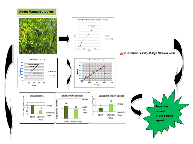 Evaluation of Antioxidant Profile of Wild and Cultivated Varieties of Aegle marmelos (L) Correa Leaves Used as Anti-Diabetic Agent